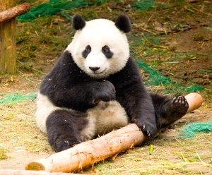 Panda 4.1 – Who Wins and Who Loses?